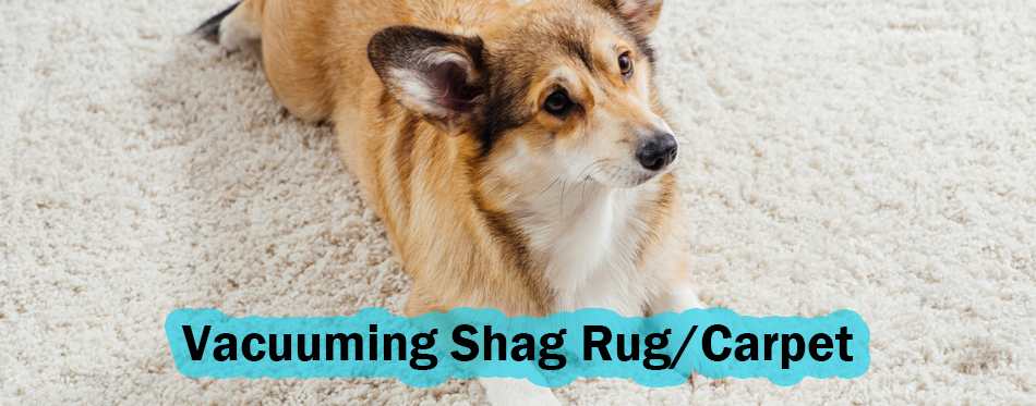 dog laying on a shag carpet rug